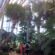 U.S. Destinations: The Nicholas Conservatory, a Rockford Illinois' Park District Gem