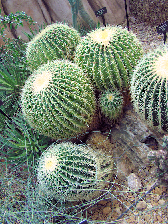 barrel-cactus-desert-dome-milwaukee-wi-usa-destination-manufactured-home-living-news