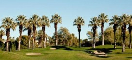 palm-trees-posted-on-manufactured-home-living-news