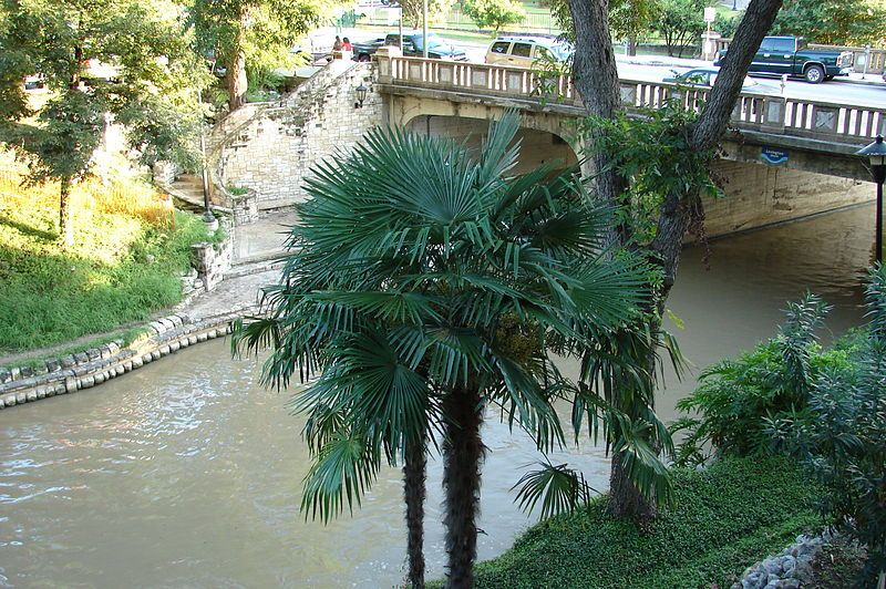 palm-trees-plants-flowers-ducks-river-walk-san-antonio-texas-credit-wikicommons-posted-manufactured-home-living-news-