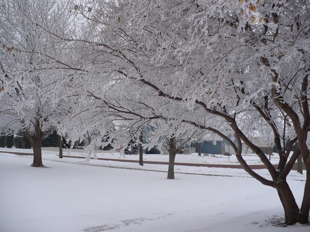 winter-trees-stashabella-flickrcreativecommons-posted-mhlivingnews-com-